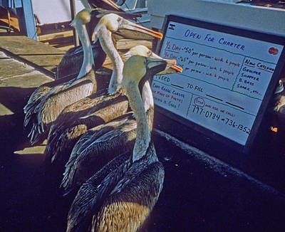 Photograph - Pelicans And The Menu by Frank DiMarco