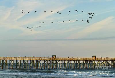 Photograph - Pelicans At Flagler Beach by Deborah Benoit