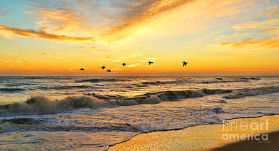 Pelicans At Sunrise  Signed 4651b 2  Print by Jack Schultz