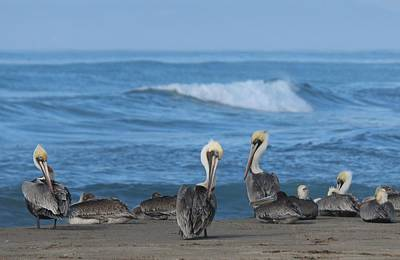 Photograph - Pelicans At The Beach - 2 by Christy Pooschke