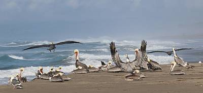 Photograph - Pelicans At The Beach  by Christy Pooschke