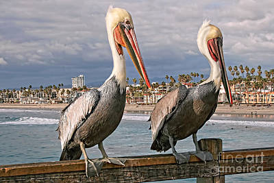 Photograph - Pelican's Best Place by Gabriele Pomykaj