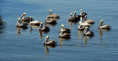 Pelicans Blue Art Print