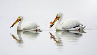 Photograph - Pelicans by Erica Kinsella