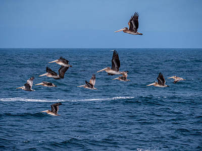Photograph - Pelicans Fly Over The Water by Derek Dean