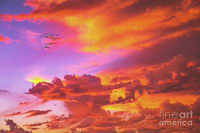 Photograph - Pelicans Flying Into Sunset  by David Zanzinger