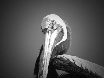 Pelican's Gaze Art Print by Megan Verzoni