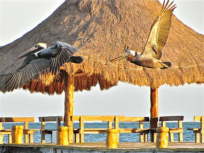 Art Print featuring the photograph Pelicans In Flight by Sean Griffin