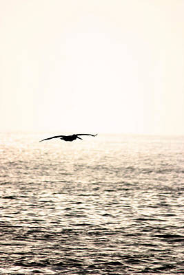 Photograph - Pelicans Journey by Brad Scott