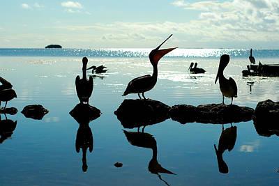 Pelicans Key West Art Print