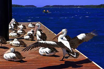 Photograph - Pelican's Landing 2 Touchdown by Miroslava Jurcik