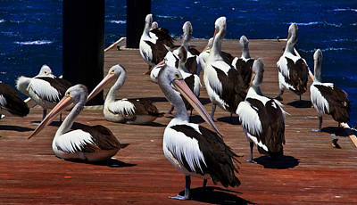 Photograph - Pelican's Meet Up Group by Miroslava Jurcik