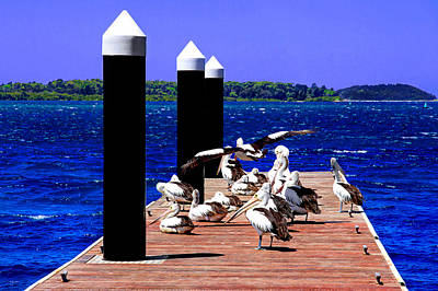 Photograph - Pelican's Meeting At The Pier Of Greenwell Point by Miroslava Jurcik
