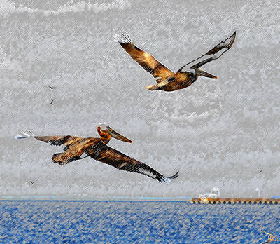 Brown Pelican Painting - Pelicans Over Ballast Point by David Lee Thompson