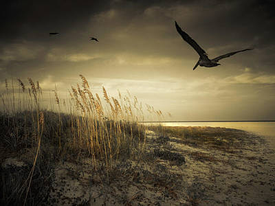 Photograph - Pelicans Over The Beach by Sandra Selle Rodriguez