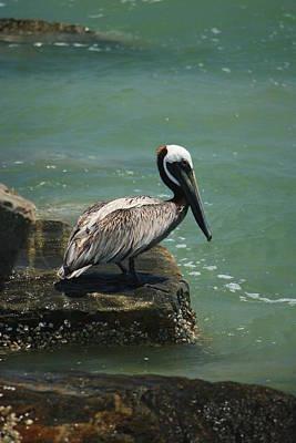 Photograph - Pelican's Perch by Mandy Shupp