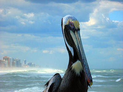 Photograph - Pelicans Rule The World by Elyza Rodriguez