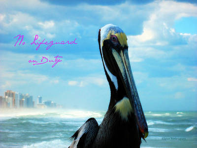 Photograph - Pelicans Rule The World Limited Special by Elyza Rodriguez