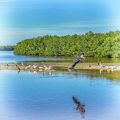 Photograph - Pelicans Sanibel Island Florida Dsc00782_16 by Greg Kluempers
