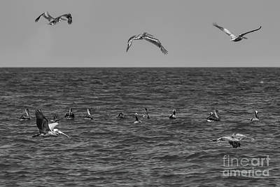 Photograph - Pelicans Seascape by Olga Hamilton