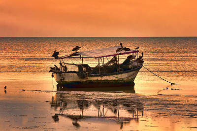 Photograph - Pelicans Sunset by Nadia Sanowar