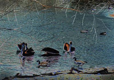 Photograph - Pelicans by Susan Garrett