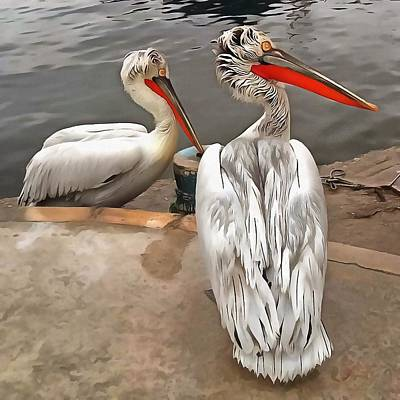 Painting - Pelicans - The Grey Twins by Tracey Harrington-Simpson