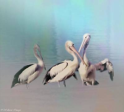 Photograph - Pelicans Three By The Sea by Wallaroo Images