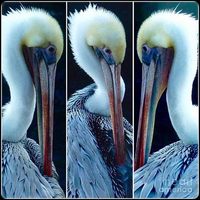 Photograph - Pelican's Turn  by Susan Garren