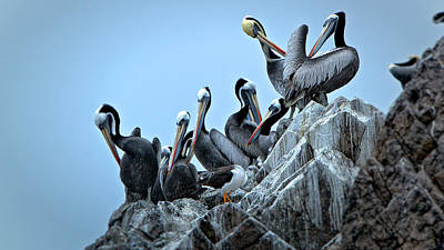 Pelikan Photograph - Pelikans  by Alberto Audisio