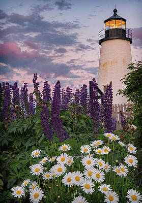 Photograph - Pemaquid And Flowers by Darylann Leonard Photography