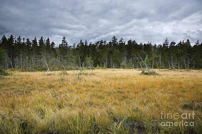 Pemigewasset Wilderness - Lincoln New Hampshire Usa Art Print