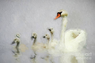 Photograph - Pen And Her Cygnets by Darren Fisher
