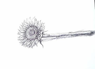 Drawing - Pen Sunflower  by Hae Kim