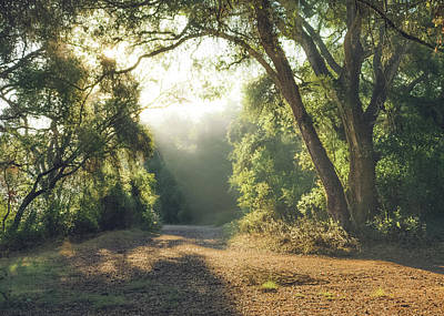 Photograph - Penasquitos - Backlit Trail by Alexander Kunz