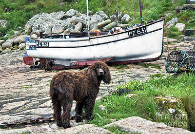 Photograph - Penberth Pooch by Terri Waters