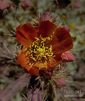 Photograph -  Pencil Cholla Cactus Blossom-signed-#2291 by J L Woody Wooden