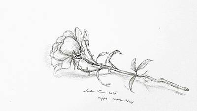 Drawing - Pencil Rose From Garden by Hae Kim