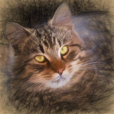 Painted Details Drawing - Pencil Sketch With The Image Of A Tabby Cat by Lubos Chlubny