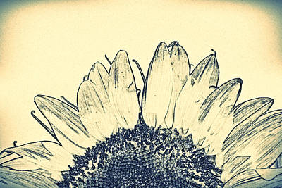 Photograph - Pencil Sunflower- Fine Art by KayeCee Spain