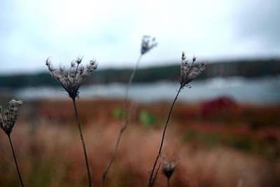 Photograph - Penetrating Chill  by Lon Casler Bixby
