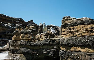 Photograph - Penguin Crow And Seagull by Tom Cochran