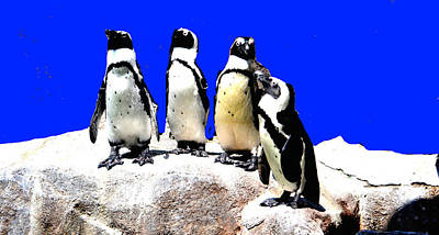 Photograph - Penguin  Family by Anand Swaroop Manchiraju