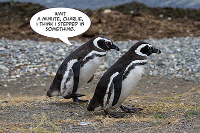 Photograph - Penguin Funnies 01 by John Haldane