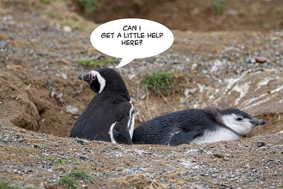 Photograph - Penguin Funnies 02 by John Haldane
