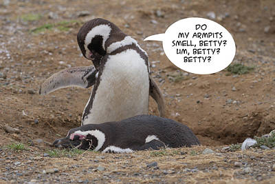 Photograph - Penguin Funnies 03 by John Haldane