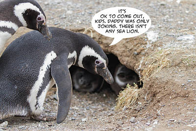 Photograph - Penguin Funnies 04 by John Haldane
