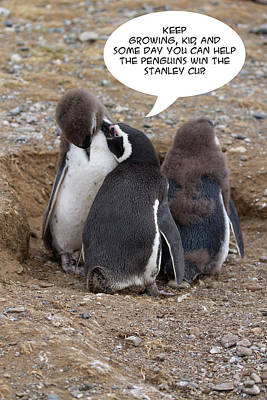 Photograph - Penguin Funnies 05 by John Haldane