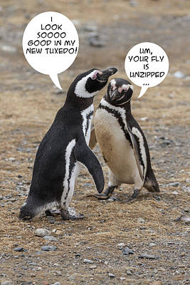 Photograph - Penguin Funnies 07 by John Haldane