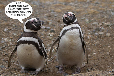 Photograph - Penguin Funnies 08 by John Haldane